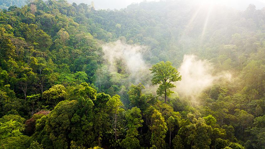 protection-de-la-forêt